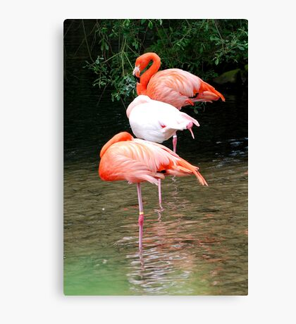 Three of Us Canvas Print