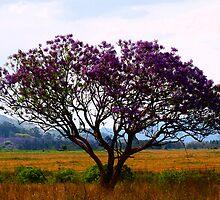 Nature's Purple by Joe Mckay