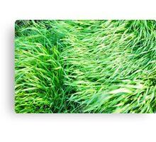 Windswept Grass Canvas Print