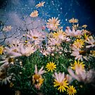 Daisy Frenzy by purelydecorative