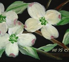 DOGWOOD CARD  -  HE IS RISEN  by librapat