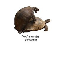 You're Turtley Awesome Photographic Print