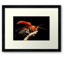 Orange Beetle Framed Print