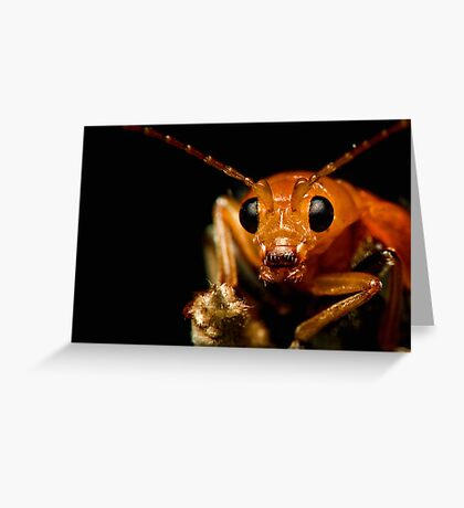 Orange Beetle 2 Greeting Card