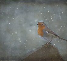 Mr Robins Snowstorm - Textured by SusieBImages