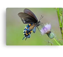 Butterfly in the park Canvas Print