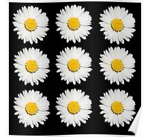 Nine Common Daisies Isolated on A Black Backgound Poster