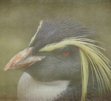 Rockhopper Penguins Bad Hair Day - Textured by SusieBImages