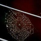 charlotte's web by alyssa naccarella