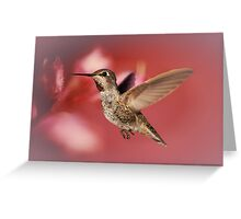 Humming Bird Art Greeting Card