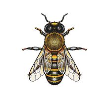 Get your buzz on with this custom bee design! Photographic Print