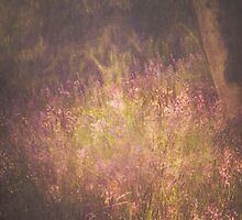 Bluebell Woods - Textured by SusieBImages