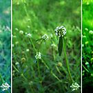 Clover Triptych by meadaura