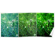 Clover Triptych Poster