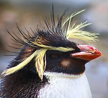 Bad Hair Day  by jdmphotography