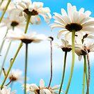 Daisy sky by Sophie Watson