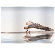 Landing Bird. Poster