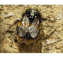 Bumble-Bee Wings Photographic Print