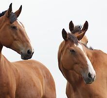 More horses by redstone