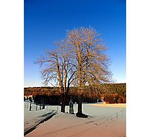 Cross with guardian trees in winter wonderland | landscape photography Photographic Print