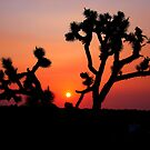 Joshua Tree at dusk by flyfish70