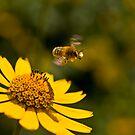 Bee Off by Geoffrey