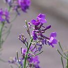 Purple Flowers 1 by davesphotographics