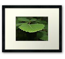 NC plant Framed Print
