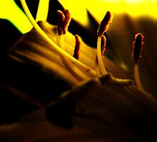 Lemon Lilly Touched by Light by RLHall