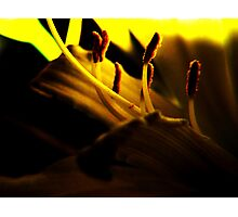 Lemon Lilly Touched by Light Photographic Print