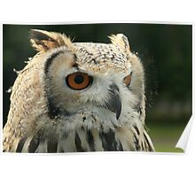 Bengal Eagle Owl Portrait (Bubo Bengelensis) Poster