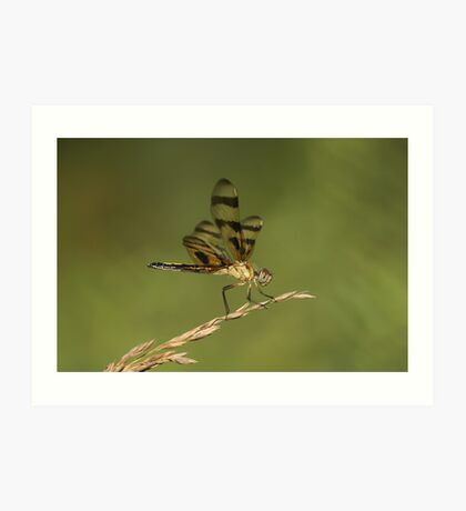 Another Dragonfly Art Print