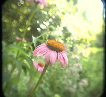 Old Pink by deirdre butler derby