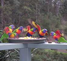 Rainbow Lorikeets Feeding Frenzy by Helen Phillips