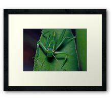Grass hopper communicating Framed Print