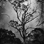 Solitude by Samantha Cole-Surjan