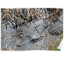 Mother and baby Alligator Poster