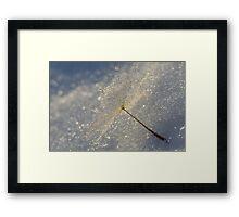Winter Droplet's  Framed Print