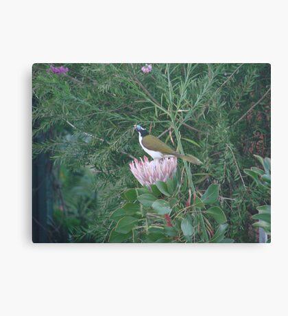 Purple Protea & Blue Jewel Canvas Print