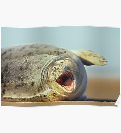 Laughing Seal Poster