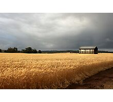 wheat field /clearing storm Photographic Print