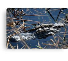 Baby Gator & Mother Canvas Print