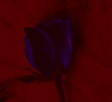 Purple Rose on Red Background Creative Art by Adri Turner