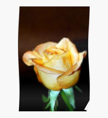 Colour Sketched Peach Rose Poster