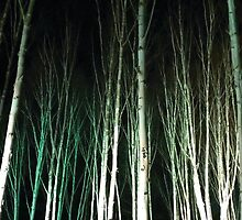Anglesey Abbey, Winter Lights 2014 #6 by NA-Designs