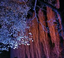 Anglesey Abbey, Winter Lights 2014 #8 by NA-Designs