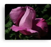 dark beach rose Canvas Print