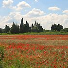 Poppies of Provence by Josette21