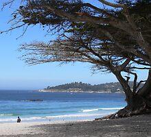 Carmel, CA. by Debra  Lungren