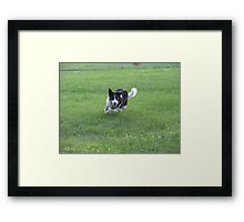 I'll Get That Ball! Framed Print